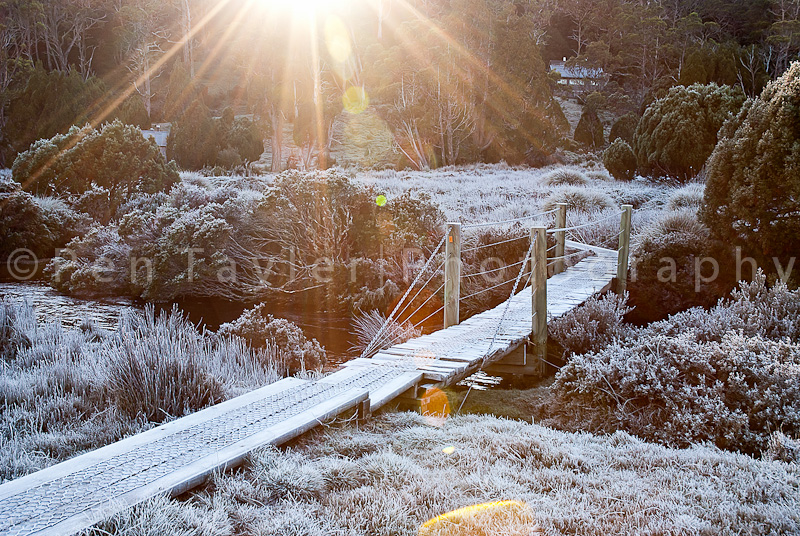 Early Morning Sunlight – Ronnie Creek