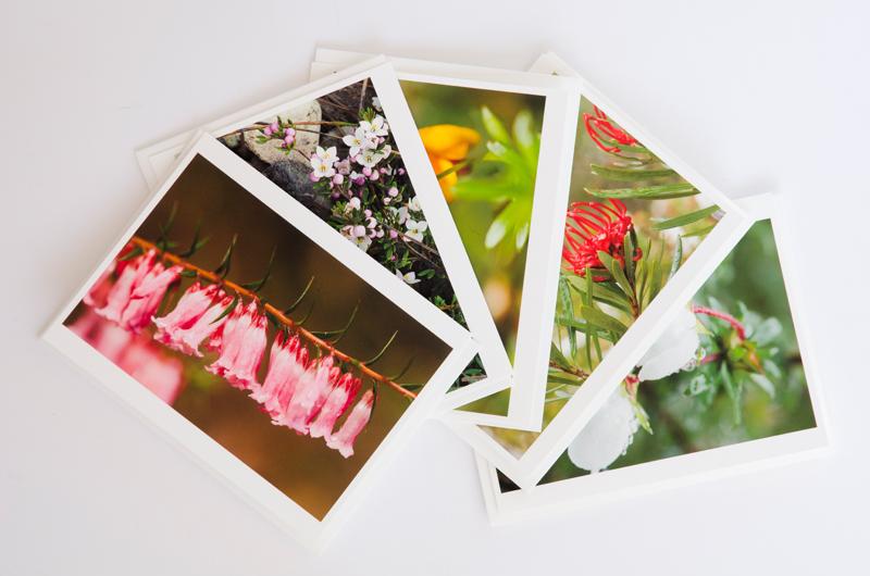 Tasmanian wildflowers