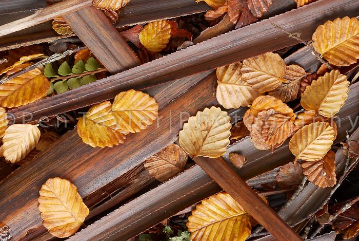 Forest floor in Weindorfer's Forest, Waldheim,